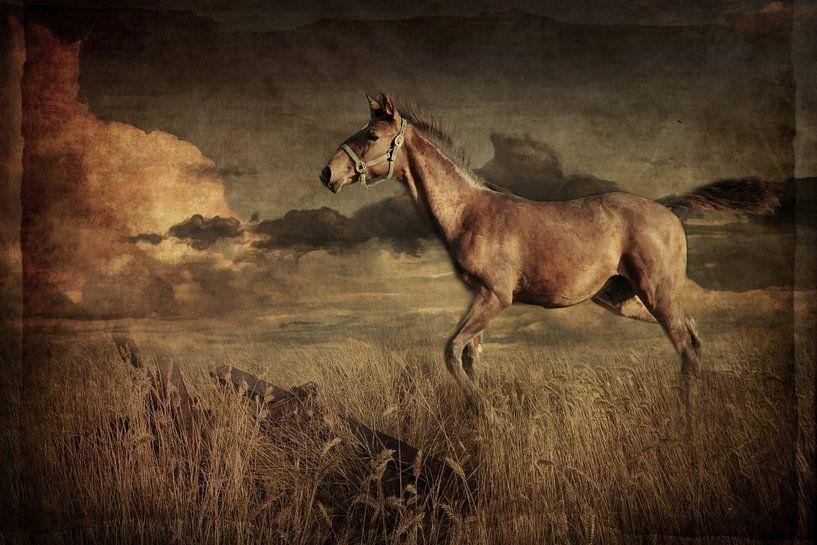 Pferd 1 van Heike Hultsch