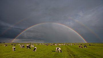 Weide, Kühe und ein Regenbogen von Fonger de Vlas