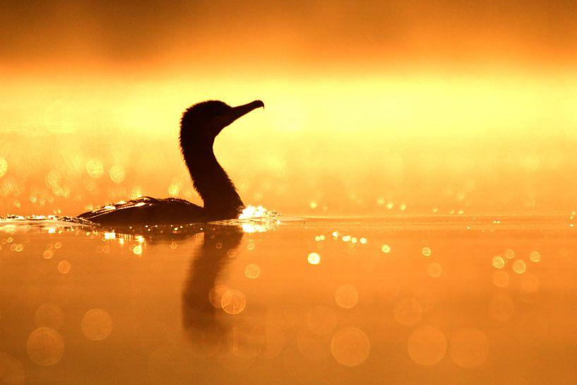 Aalscholver in tegenlicht van Sam Mannaerts Natuurfotografie