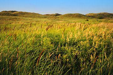 Blühendes Gras in der Düne. von Kaap Hoorn Gallery