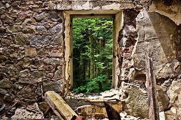 Vue de la forêt sur Dick Carlier