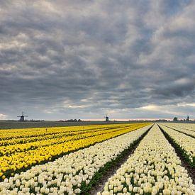 Bloembollen velden nabij Schermerhorn van John Leeninga