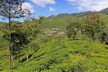 Theevelden in Sri Lanka van Antwan Janssen