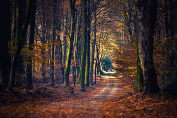 Wandelpad tussen de sfeervol  gekleurde herfstbomen van Fotografiecor .nl