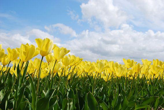 Geel tulpenveld van Leuntje 's shop
