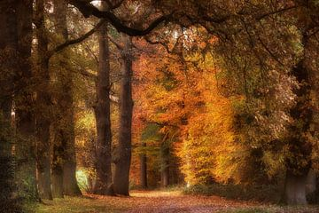 Dutch forest van Tom Kraaijenbrink