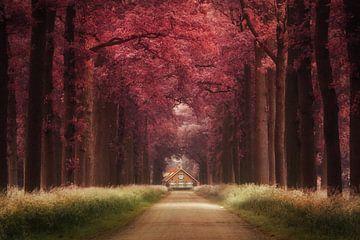 Dreamland von Martin Podt