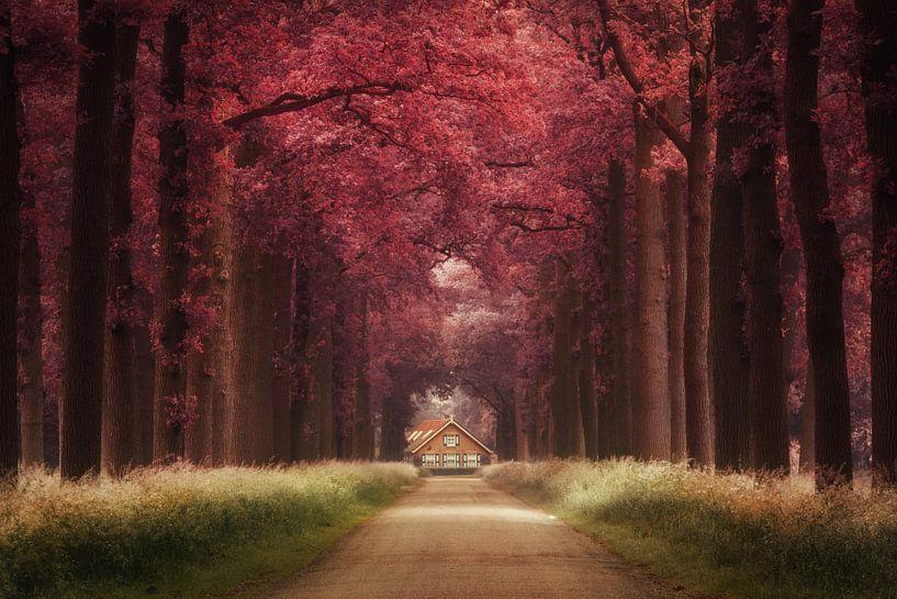 Dreamland van Martin Podt