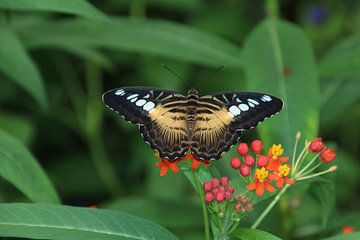vlinder van Gerda Guichelaar