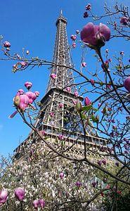 De Eiffeltoren in bloei