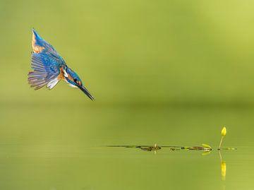 The Blue Arrow!