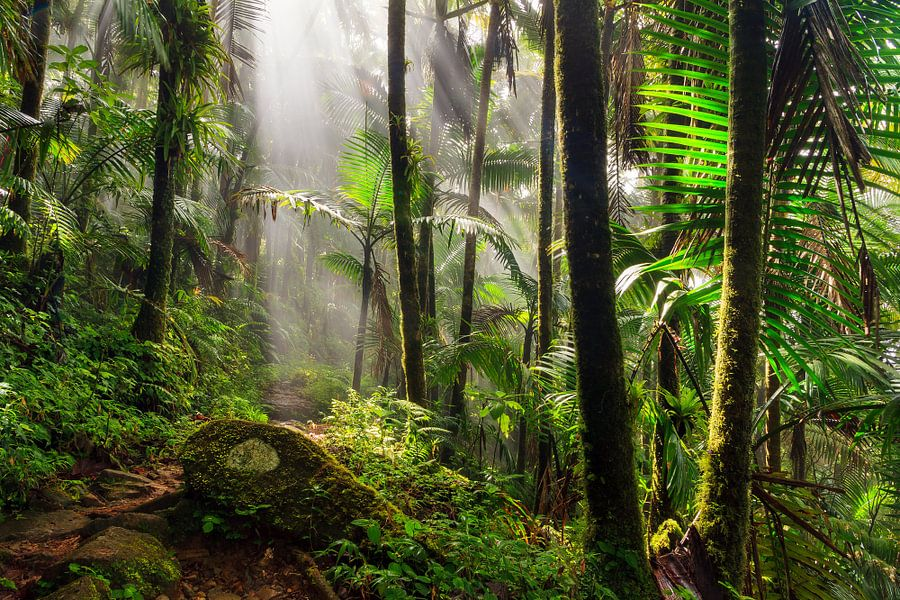 El Yunque jungle van Dennis van de Water