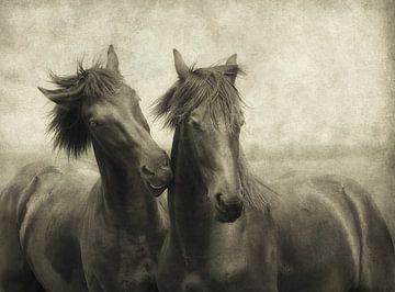 Paarden fluisteren niet, ze praten gewoon van