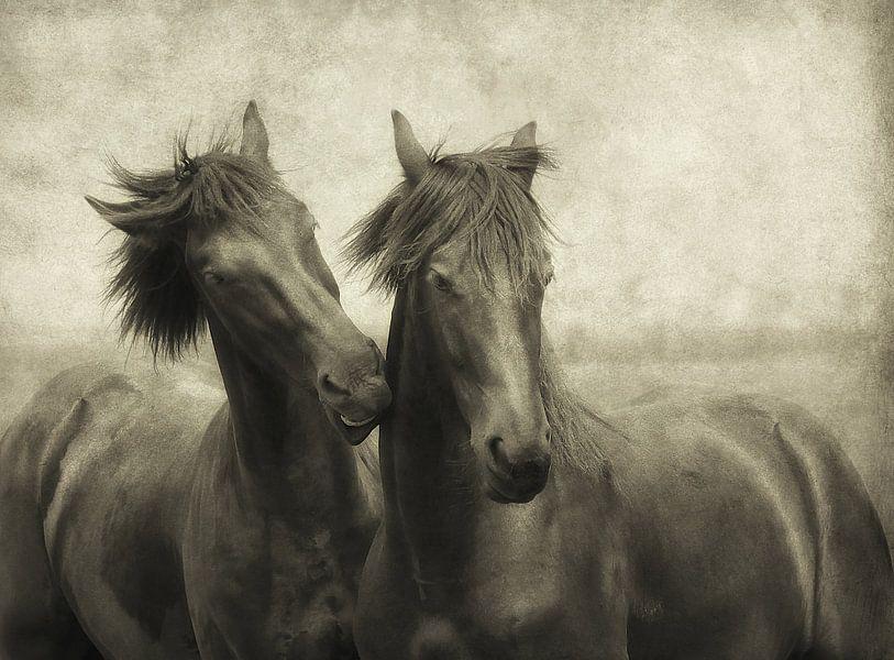 Paarden fluisteren niet, ze praten gewoon
