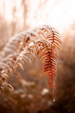 Herbstblätter mit Tautropfen von Evelien Oerlemans