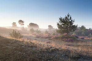 Morning awakening