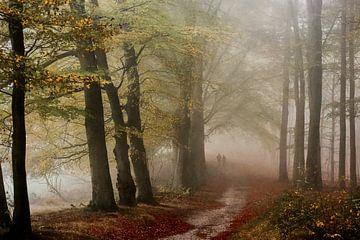 Nebeliger Weg in Veluwe von Lars van de Goor