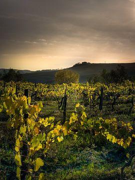 Weinberg in der Toskana in Italien mit schönen Erdfarben von Fine Art Fotografie