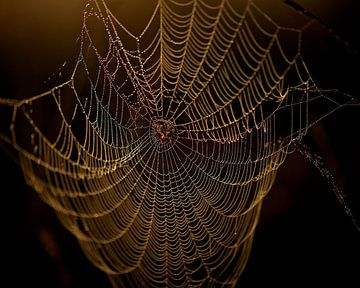 Spinnenweb von Erik Veldkamp