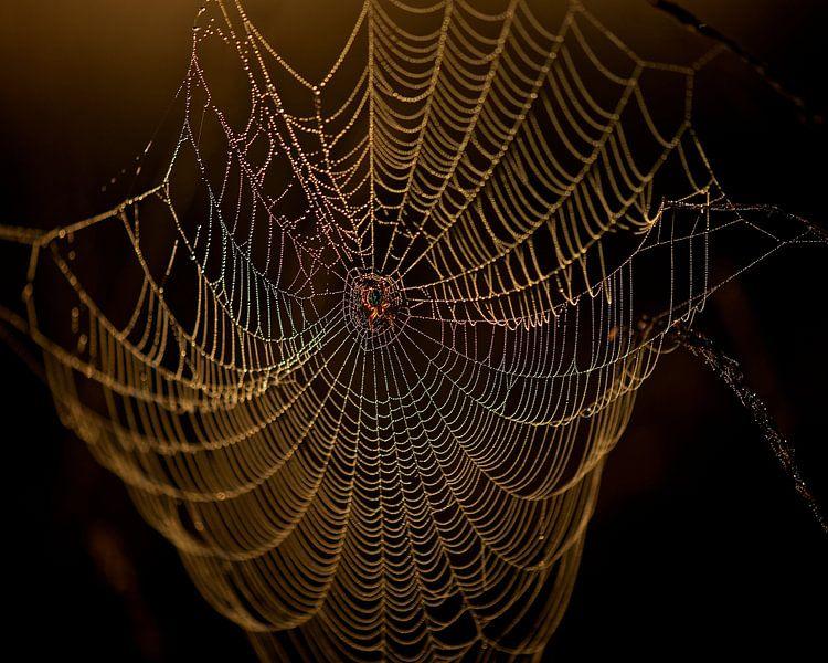 Spinnenweb van Erik Veldkamp