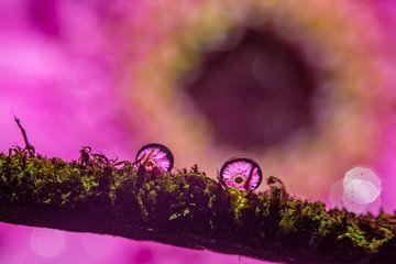 Druppels in het mos? van Erik de Rijk