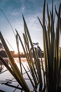 Sonne auf dem Wasser von Renske Spijkers