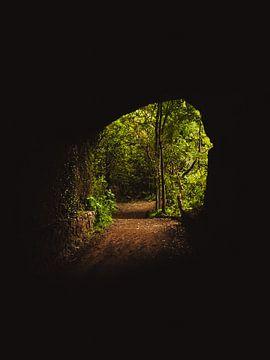 Bosque de Los Tilos, La Palma van Joren van den Bos