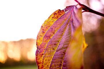 herfst van Martina Weidner