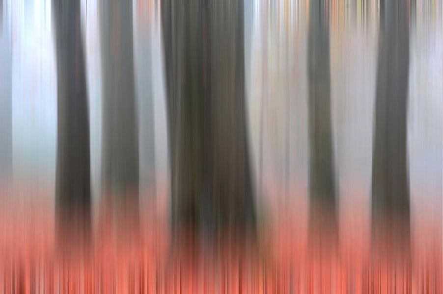 Omfloerste bomen