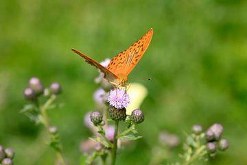 Vlinder van Thomas Jäger