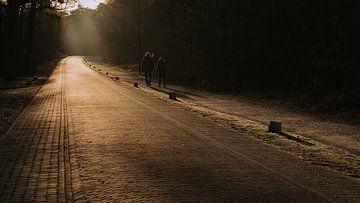 La route de la plage de Vlieland au petit matin.