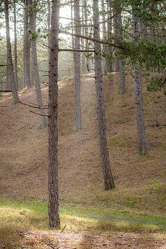 La neige mouillée dans les bois de Vlieland