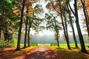 bosgezicht met herfst kleuren van
