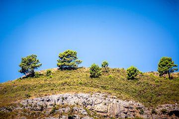 Bomen op een heuvelrug von Bernardine de Laat