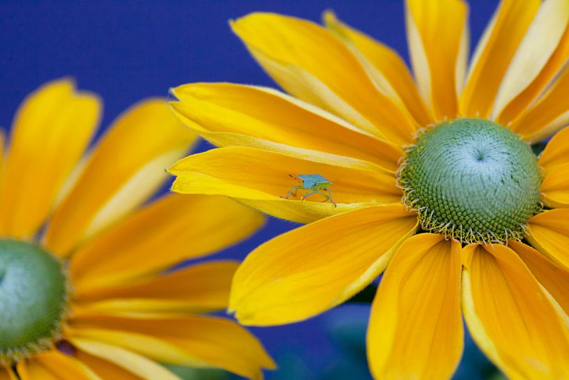 Who's afraid of Blue, Yellow and Green van Nanouk el Gamal - Wijchers (Photonook)
