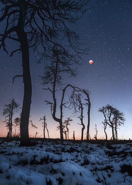 Supermoon over the High Fens von Peter Poppe