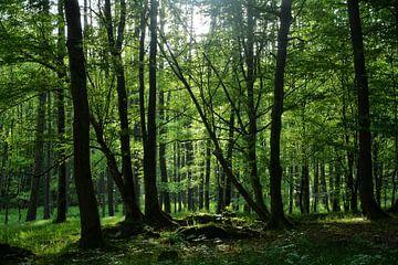 Sonnenaufgang im grünen Wald