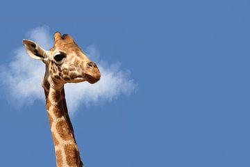 Portret van een Giraffe van Elles Rijsdijk