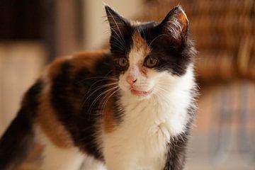 Schattige kitten van Manongraphy