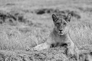 Jonge Leeuw van Robert van Brug