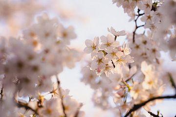 Blütebaum in Blüte Japanischer Blütengarten Amstelveen von Joyce van Galen