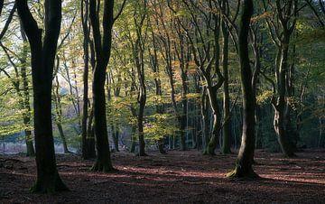 Alte Bäume von Roelof Nijholt