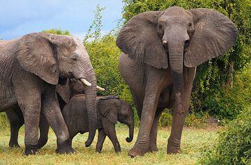 Familie olifanten in Afrika van Eye to Eye Xperience By Mris & Fred