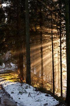 Zonnestralen door de bomen van Anne Meyer