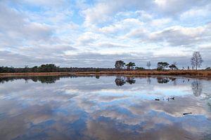 Reflecties bij de Kalmthoutse Heide van Nel Diepstraten