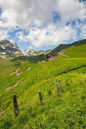 Sommer auf der Grindelwald First Wanderweg mit Schreckhorn und Eiger in den Berner Alpen in der Schw