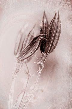 Blumensamen von Dick Jeukens