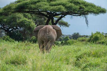 Afrikaanse olifant van Alexander Schulz