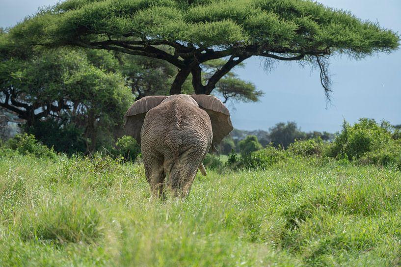 Afrikanischer Elefant von Alexander Schulz