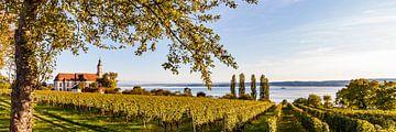 Wijngaarden en de bedevaartskerk Birnau bij de Bodensee van Werner Dieterich